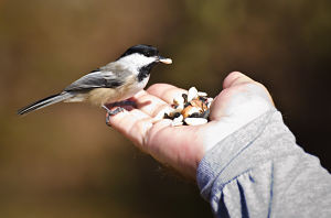 Picture of a bird eating from someone's hand.