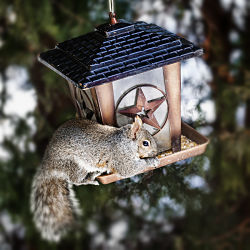 Squirrel Proof Bird Feeders Small