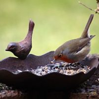 Guide To Wild Bird Seed And Food