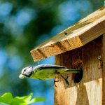 Cleaning Bird Houses