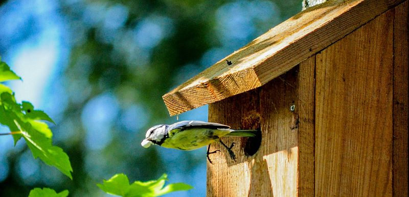 Picture of a bird outside bird house.