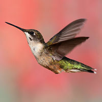 How to get a hummingbird out of your garage