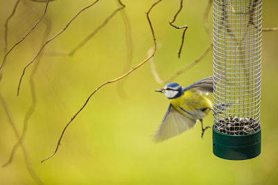 Picture of a bird feeding at a feeder.