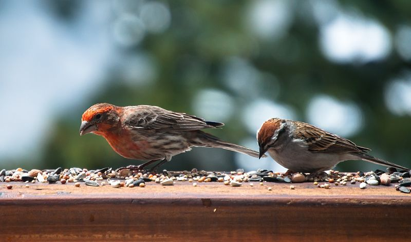 A comprehensive guide to wild bird seed and wild bird food in general