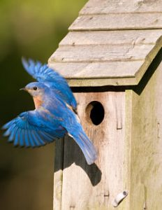 Protecting Birdhouses From Predators