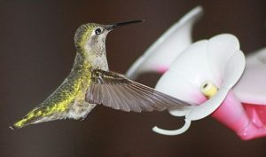 What To Feed Hummingbirds
