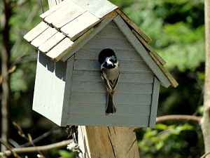 When To Clean Out Bird Houses