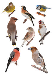 Merveilleux Backyard Bird Identification Guide