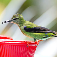 Here are some fun and interesting facts about hummingbirds