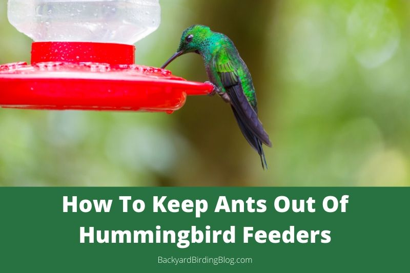 Featured image for a post with tips on how to keep ants out of hummingbird feeders.