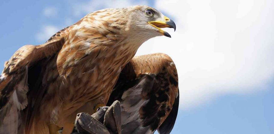 Raptors – Birds Of Prey