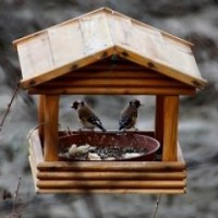 Fly Through Bird Feeders
