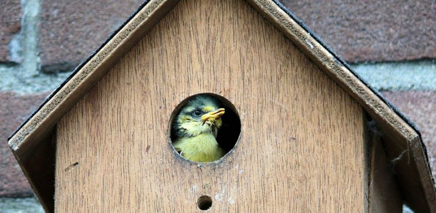 Bird House Mistakes – Why Are My Bird Houses Empty?