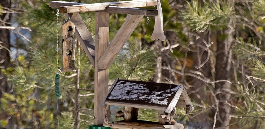 The Many Benefits Of Bird Feeding