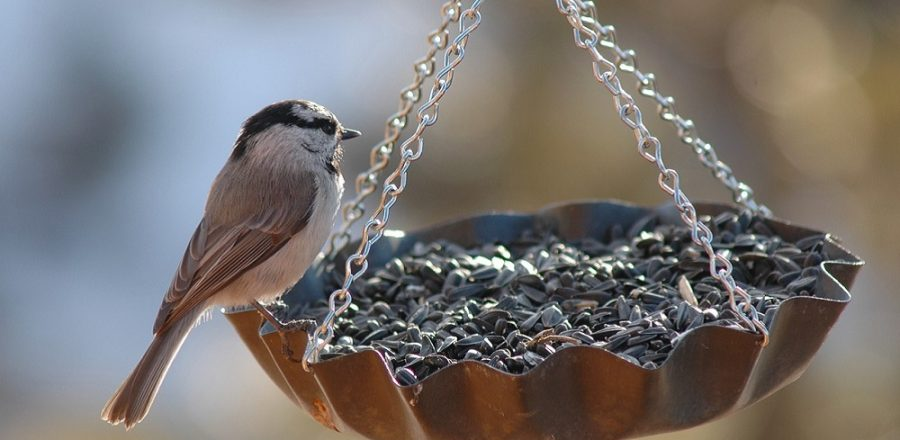 Keep Unwanted Visitors Away From Your Feeders