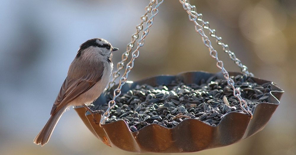 How to keep unwanted visitors away from your bird feeders