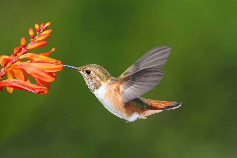 Featured image for a guide to creating a hummingbird garden to attract these beautiful birds.
