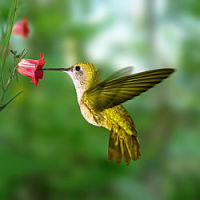 Some tips on how to attract hummingbirds to your yard