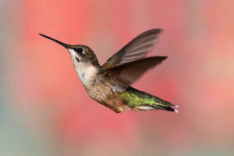 Some tips on how to get a hummingbird out of your garage