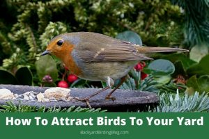 Featured image for article on how to attract birds to your yard