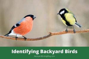 Featured image for a guide to backyard bird identification.
