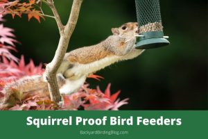 Featured image for reviews of the best squirrel proof bird feeders on the market.
